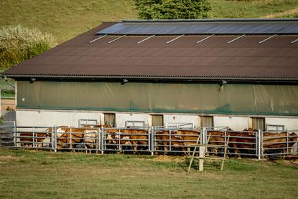 devis construction bâtiment agricole